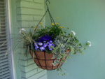 Hanging Basket of Blue and Yellow Flowers for Baby Shower